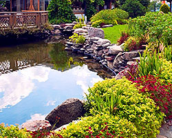 Water Features/Ponds